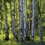 Waldgeschichtenführung durch den Hann. Mündener Forst