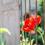 Stilvoll stöbern und entdecken – Gartenfest im Kloster Dalheim 2015
