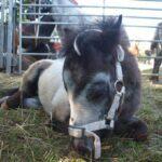 Fohlen, Traktoren und Party! Viehmarkt in Bad Wildungen