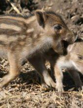 Tolles Sommerferienerlebnis im Tierpark Sababurg
