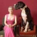 Bissige Hunde, Lockenwickler und Musiknacht – Programm des Warburger KuFo