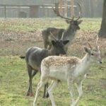 Baaambi! Süße Jungrehe im Tierpark Edersee