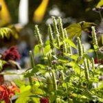 Herbstzauber Kassel: Prächtige Szenerie für den Saisonausklang