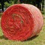 Ballenernte am Gräflichen Park Bad Driburg