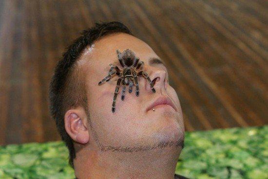 Lebende Riesen-Spinnen und Insekten Ausstellung