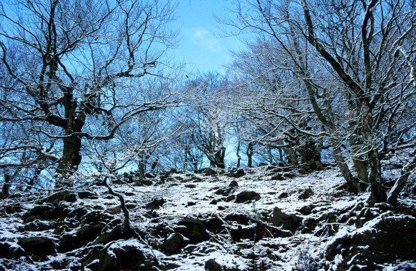 Hagenstein im Winter