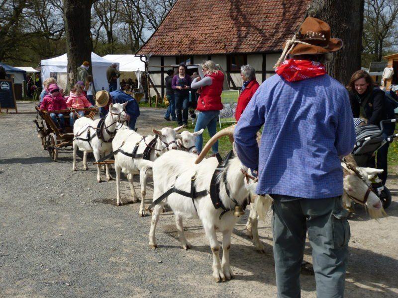 Auf dem Frühlingsmarkt 2018 im Tierpark Sababurg wird wieder eine Ziegenkutsche zu finden sein