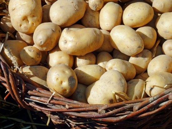 Aus regionalem Obst und Gemüse sollen durch das Rezeptbuch leckere Gerichte gezaubert werden. | (c) pixabay