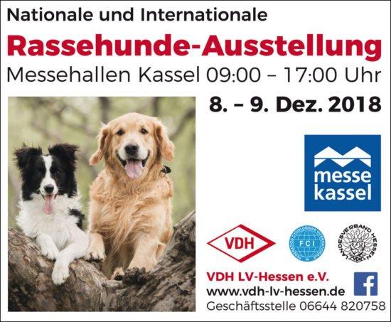 Rassehunde-Ausstellung in Kassel - Ach, wie süß!