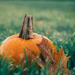 Der Oktober im Wildpark Knüll!