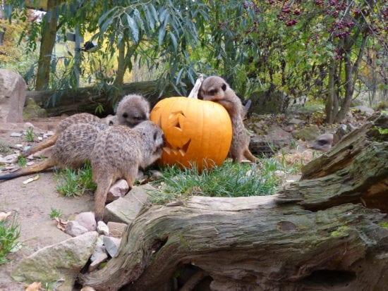 Halloween-Wochenende im Tierpark Sababurg