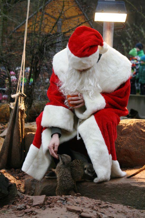 Tierweihnacht im Tierpark Sababurg: Fehlt nur noch der Schnee!