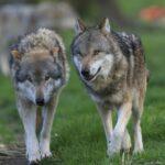 Tierpark Sababurg bietet Spendenaktion und/oder Tierpatenschaft an!