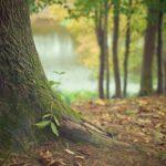 Hoffnung für den Wald: Projekt Klimawald Höxter gewinnt Ideenwettbewerb