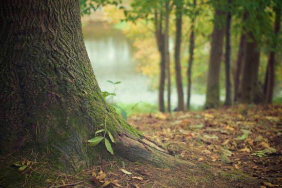 Baum-Pflanz-Aktion für Jugendliche am 7.11.2020 in Neustadt