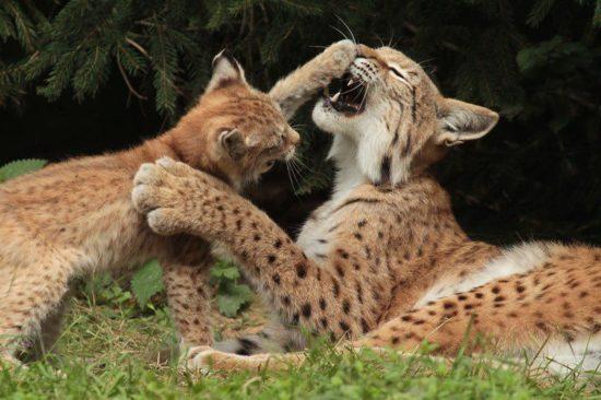 Tierfreunde freuen sich: Tierpark Sababurg wieder geöffnet!