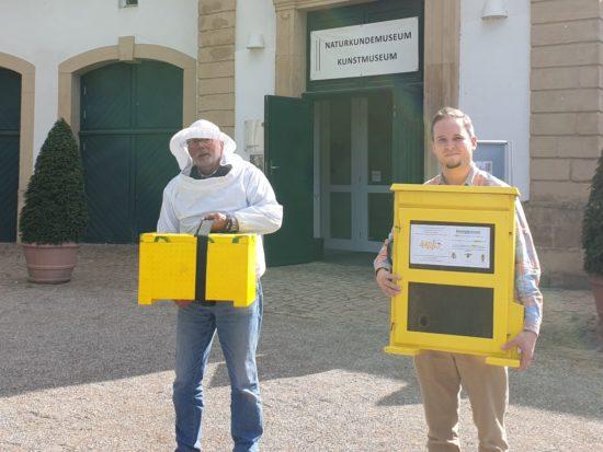 Naturkundemuseum Paderborn: Lebende Bienen kehren zurück!