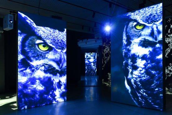 Grimmwelt Kassel: Gold für die Ausstellung »FinsterWald« beim Wettbewerb des Art Directors Club