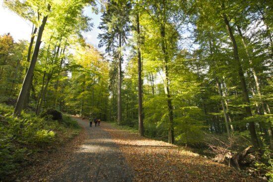 Reisejournalisten erkunden Wälder in der GrimmHeimat NordHessen
