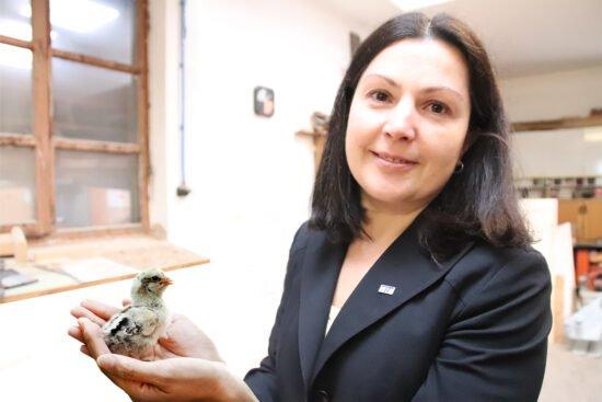Verbot des Kükentötens: TH OWL hat Verfahren zur Geschlechtsbestimmung im Ei entwickelt