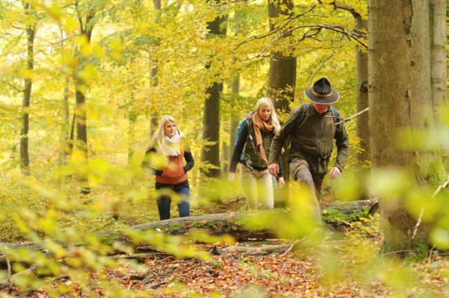 Der Nationalpark bringt Wander:innen aus jeglichen Richtungen zusammen. Die drei Ranger wollen das mit den vier neuen Events auch schaffen.   (c) Nationalpark Kellerwald-Edersee