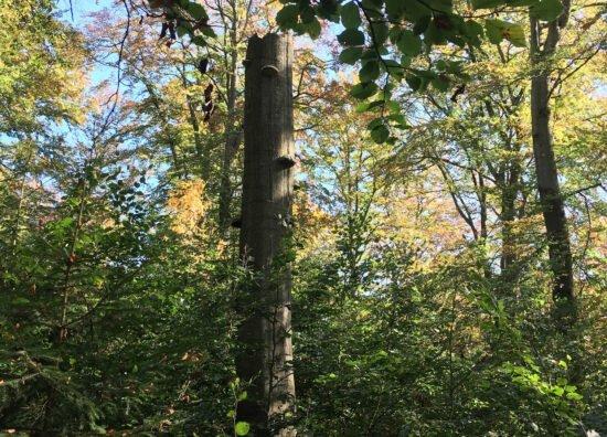 Wanderung im Farbenspiel des herbstlichen Nationalparks
