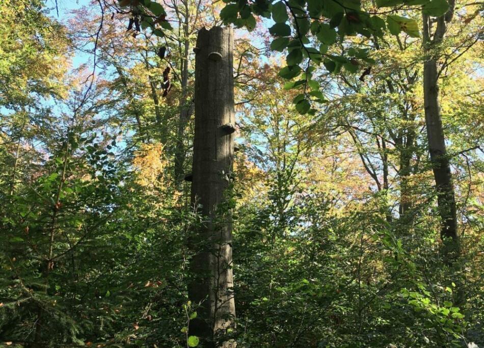 Herbstlichen Nationalpark Quer (c) Jutta Seuring