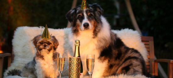 Die besten Silvester Live-Streams! Mit der ganzen Welt vereint feiern!
