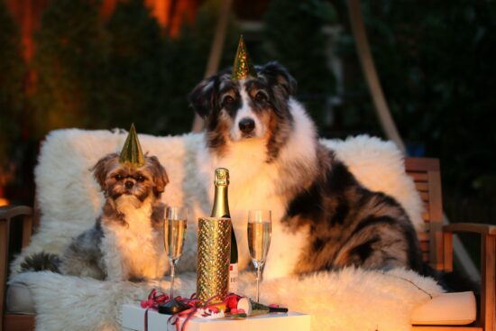 Silvester 2020: Statt Partys und Feuerwerk heißt es in diesem Jahr zuhause bleiben. Durch Silvester Live-Streams können Sie sich jedoch Ihre Stars ins heimische Wohnzimmer holen und mitfeiern! - (c) Markito pixabay