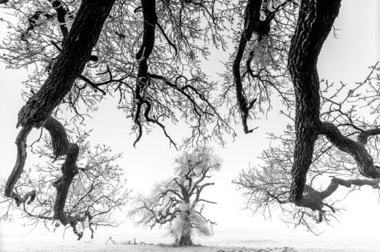 Auch Naturlandschaften können in der aktuellen Naturfoto-Ausstellung bestaunt werden. Diese Aufnahme zeigt eine winterliche Landschaft mit verschneiten Bäumen.   (c) Daroczi Csaba