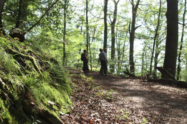 Der Nationalpark Kellerwald-Edersee ist seit jeher eine der vielen grünen Lungen Nordhessens. Im August 2021 gibt es hier vier neue Führungen.   (c) Nationalpark Kellerwald-Edersee