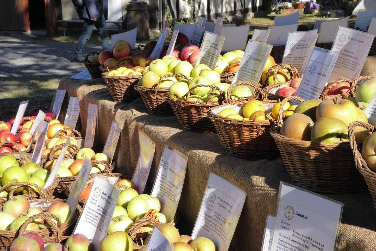 """Herbstfest """"Rund um Apfel, Kürbis und Kartoffel"""" - Tierpark Sababurg - Hofgeismar"""