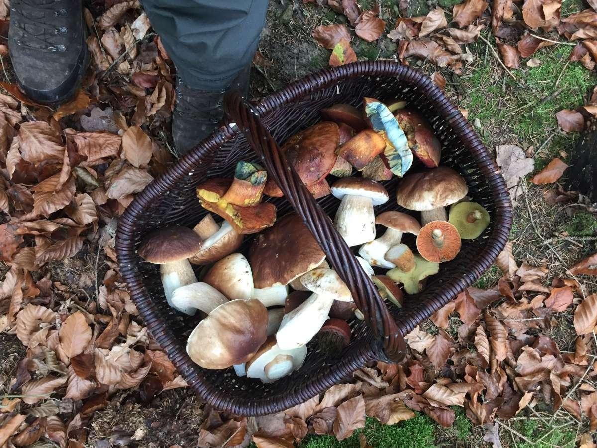 Pilzlehrwanderungen: Schätze des Waldes - Wildpark Neuhaus - Holzminden