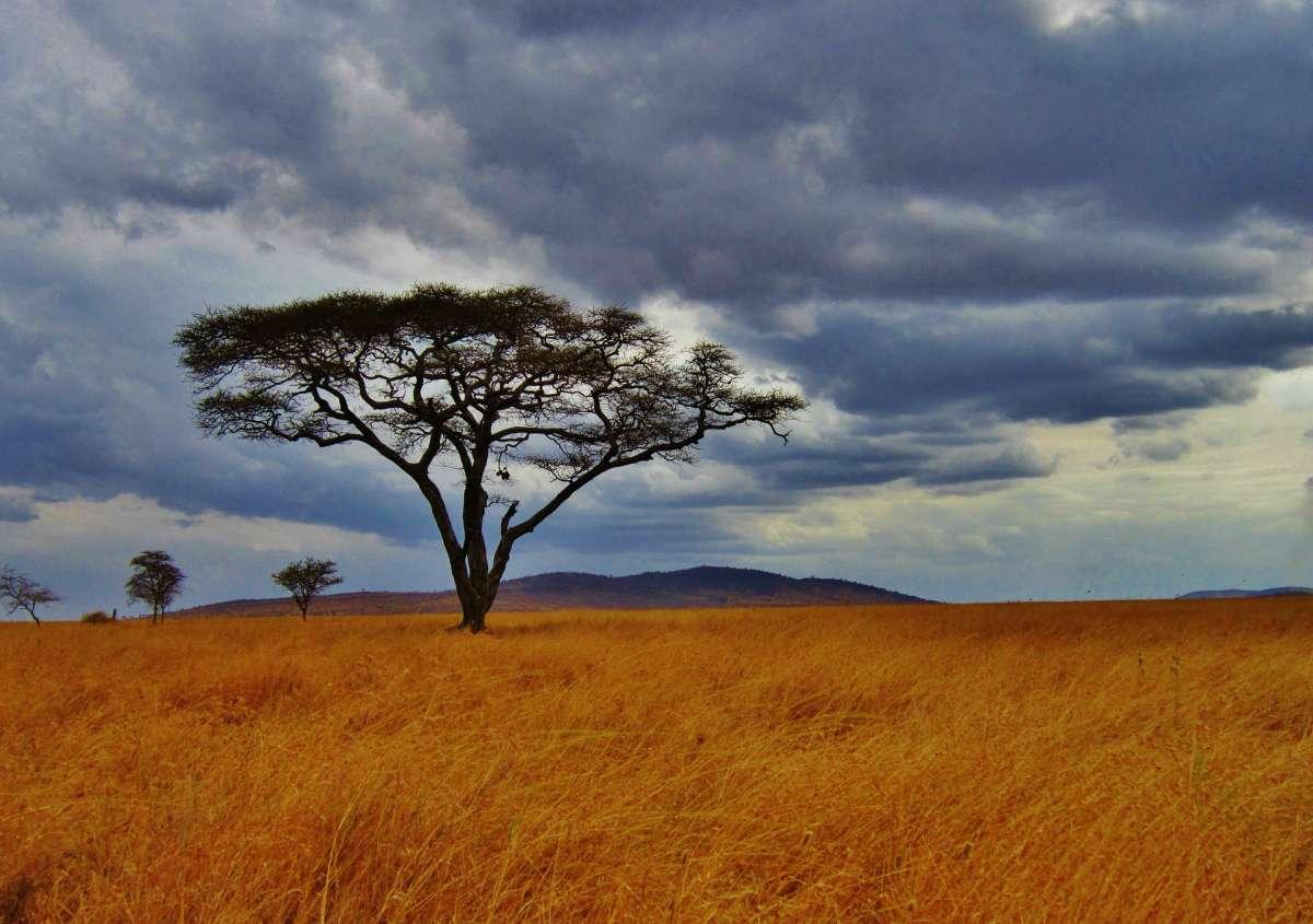 Tief in Afrika