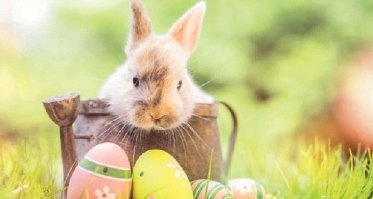 Veranstaltungen & Events am »Sonntag, 21. April 2019« in deiner Nähe...